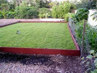 Lawn laid with Durban grass aka 'Sweet Smother Grass' and being established with rainwater