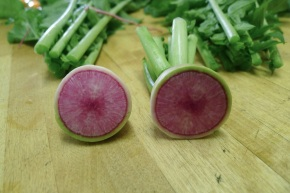 Radish, Raphanus sativus 'Watermelon'