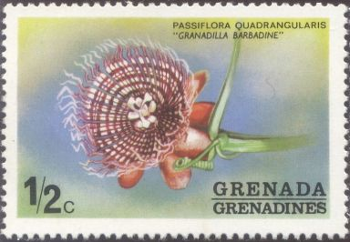 Grenada & the Grenadines - Passiflora quadrangularis, Granadilla