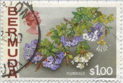 Bermuda - Plumbago capensis, Plumbago