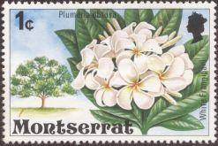 Montserrat, Plumeria obtusa