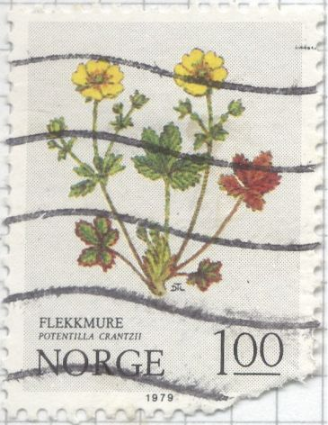 Noway - Potentilla neumanniana 'Nana', Spring Cinquefoil