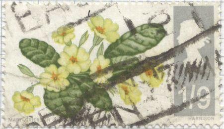 UK - Primula vulgaris, Primrose