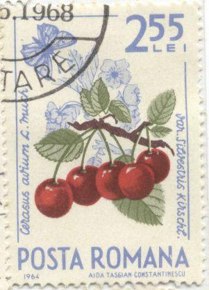 Romania - Prunus avium var. silvestris