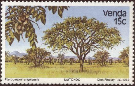 Venda - Pterocarpus angolensis, Wild Teak