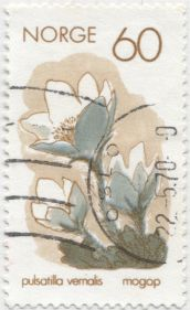 Noway - Pulsatilla vernalis