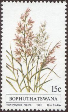 Bophuthatswana - Rhynchelytrum repens, Natal grass