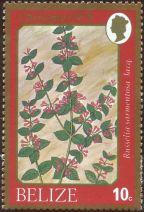 Belize - Russelia sarmentosa
