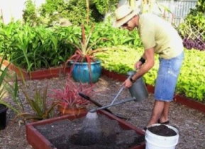 Damo Planting a drought resistant pandanus