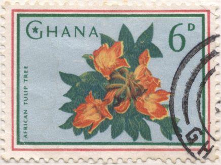 Ghana - Tulip tree, Spathodea campanulata