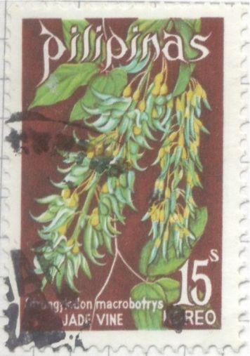 Philippines - Strongylodon macrobotrys, Jade vine