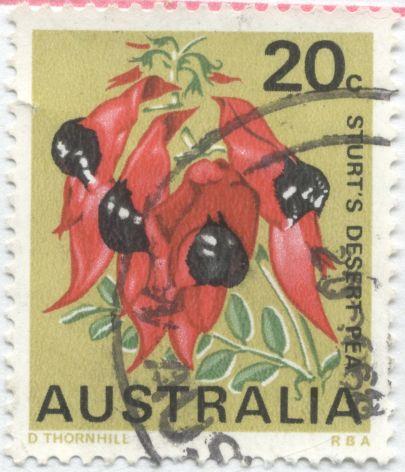 Australia, Sturt's desert pea, Swainsona formosa