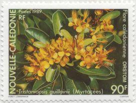 New Caledonia - Tristaniopsis guillainii