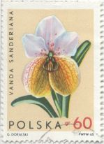 Poland - Vanda sanderiana