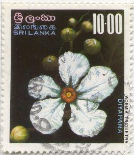 Wormia triquetra (Dilleniaceae)