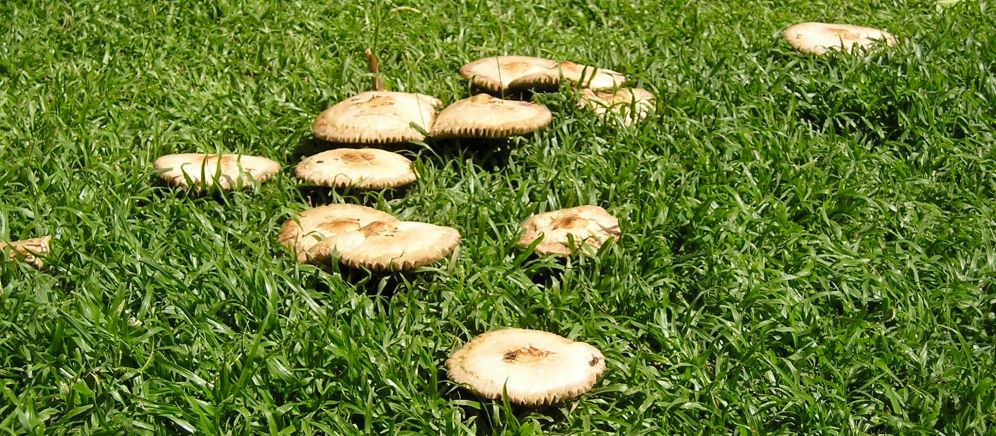 april toadstools