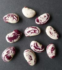 Bean, Phaseolus lunatus 'Madagascar'