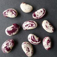 Bean, Phaseolus lunatus 'Madagascar'