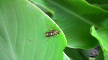 unknown parasitoid paper wasp species