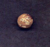 Physic Nut, Jatropha podagrica