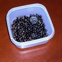Sabal palmetto seed.JPG