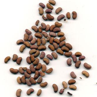 Snake bean, Vigna unguiculata