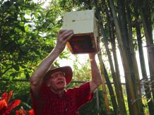 Tim Heard (www.sugarbag.net) demonstrates how to split a stingless bee hive