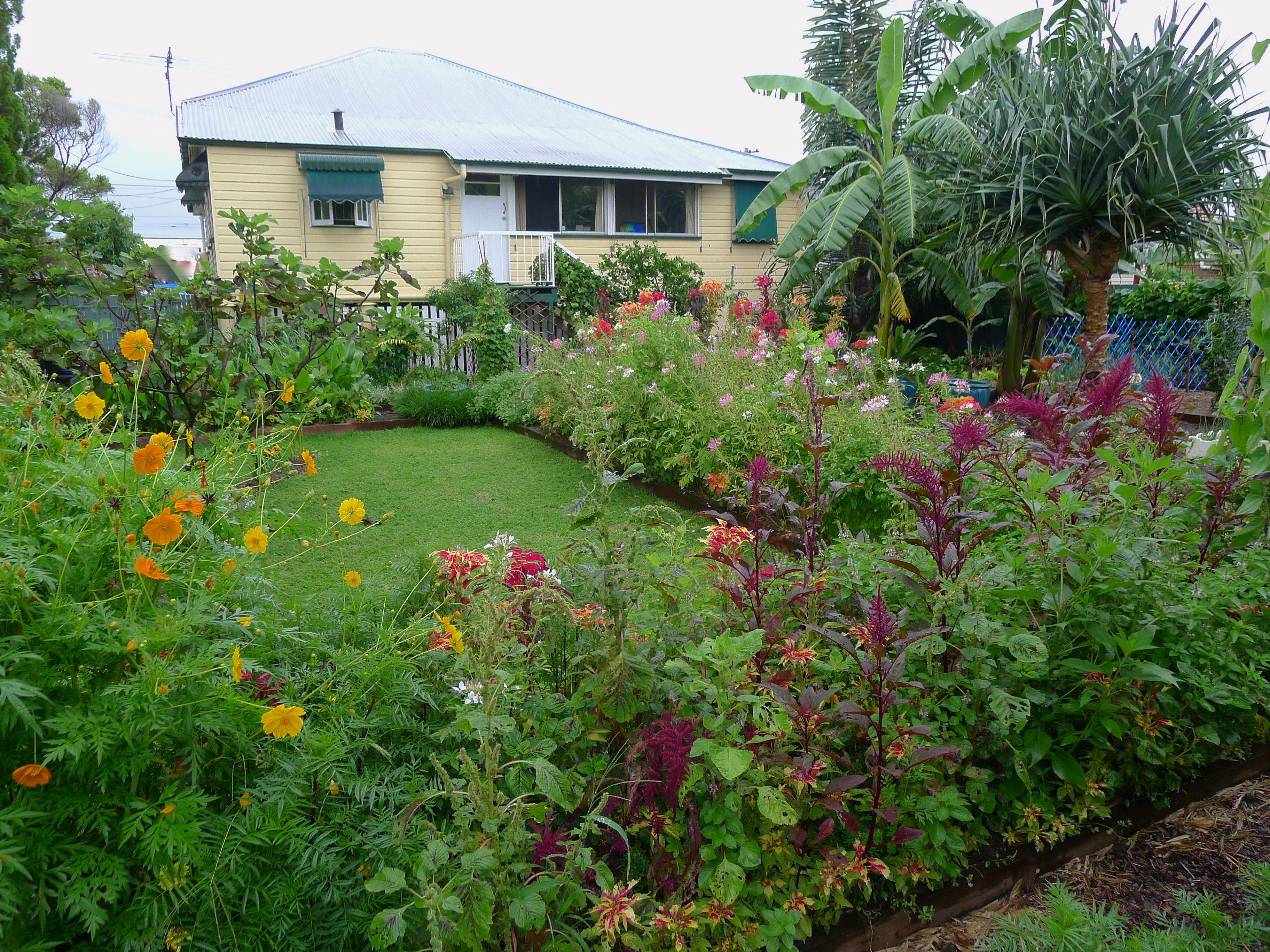 bellis back garden with predator border in february 4