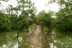 UNESCO funded mangrove walk. Sundarban National Park, Bangladesh