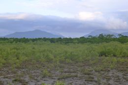 Tropical salt-marsh, Cairns
