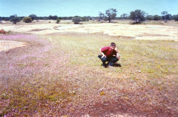 Botanising on my botanical scholarship to Western Australia in 1982. Amongst a field of Levenhookia, a uniquely Australian plant