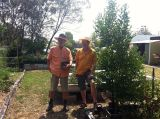 Ron takes Jerry to see how the 'Parramatta Sweets' mandarin, planted in 2010, has grown.