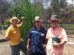 John and Ron, two of Kyabra Street's hard core gardeners, with Jerry and his three year old 'Parramatta Sweets' mandarin