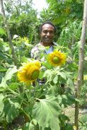 OB with sunflowers