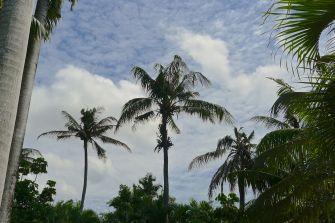 Moresby skyline
