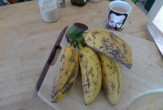 Prolific plantain, Musa x paradisiaca 'Bluggoe' - fruit weigh 0.5kg each