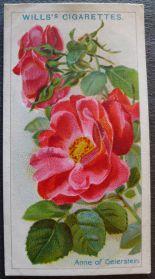 Rose, Anne of Geierstein, Briar Rose