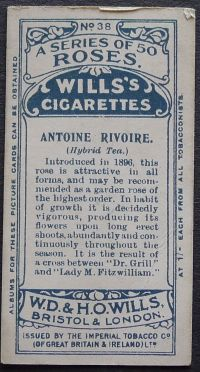 Rose, Antoine Rivoire