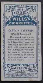Rose, Captain Hayward