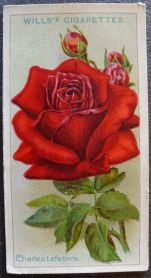 Rose, Charles Lefebvre, Hybrid Perpetual