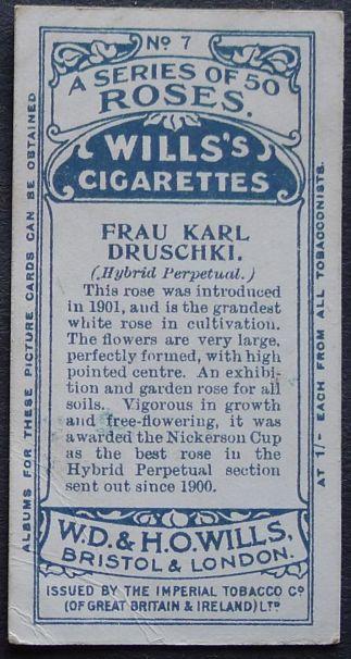 Rose, Frau Karl Druschki
