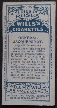 Rose, General Jacqueminot