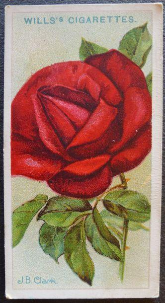 Rose, J E Clark, Hybrid Tea