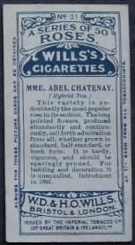 Rose, Madame Abel Chatenay