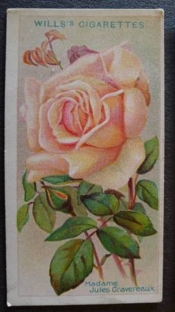 Rose, Madame Jules Gravereaux, Tea Rose