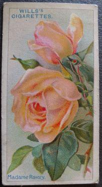 Rose, Madame Ravary, Hybrid Tea
