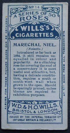 Rose, Marechal Niel