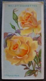 Rose, Mrs Aaron Ward, Hybrid Tea