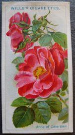 Rose, Anne of Geierstein, Briar