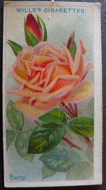 Rose, Betty, Hybrid Tea